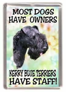 """Kerry Blue Terrier Dog Fridge Magnet """"... Kerry Blue Terriers Have Staff"""""""