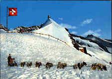 Berner Oberland Schweiz color Postkarte Jungfraujoch Polar-Hunde, Schlittenhunde