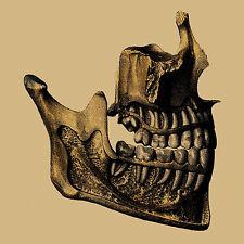 Skull Jaw & Teeth Greeting Card Re-imagined Vintage Anatomical Image