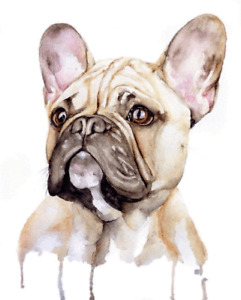 French Bulldog Colour Wall Art Printed Canvas Stretched Over A Solid Pine Frame