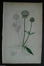 Originaldrucke (1800-1899) mit Blumen- & Pflanzen-Motiv und Kupferstich-Technik