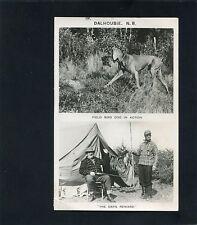 RPPC Rifle Hunting Dog Bird Duck in DALHOUSIE NB photo RP postcard New Brunswick