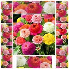 "Zinnia Elegans 50 FLOWER seeds""SCABIOSA FLOWERED MIX  SUMMER FLOWER EASY TO GROW"