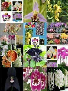 Orchideen Samen Mix