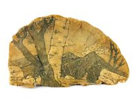 Vintage Hand Drawn Tree Conk Shelf Mushroom Fungus Signed Folk Art
