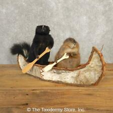 "#20614 E | Canoeing ""Pals"" Muskrat and Skunk Novelty Taxidermy Mount For Sale"