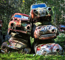 1950s Volvo's and Renault Piled up in woods junk yard  8 x 8 Photograph