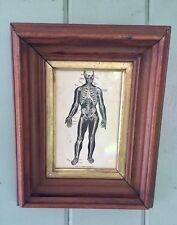 Antique Skeleton Print Deep Walnut Frame