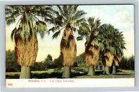 Riverside CA, Fan Palm Driveway, Vintage California Postcard