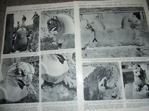Photo article archaeology Palace of Xerxes at Persepolis 1954 ref AK