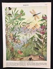 Vintage Print/Plate 1929 Encyclopedia Britannica, COMMON FORMS OF INSECT LIFE