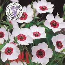 Raro Lino Serena Ojos, Linum grandiflorum - 50 Semillas-Reino Unido Vendedor