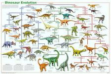 Dinosaur Evolution Educational Science Chart Poster Poster Print, 36x24