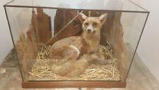 More details for stuffed fox in glass case w62cm x h48cm x d39cm