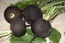 Radish Seed Winter Black Ukraine Heirloom Vegetable Seeds early