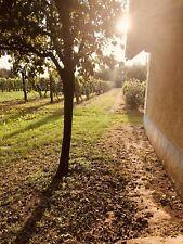 Weinberg Ferienhaus Ungarn Balaton Plattensee Haus Grundstück 1280 m²