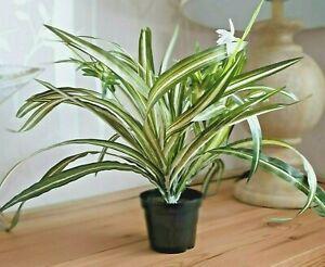 Artificial Plant Faux Spider Plant Indoor Faux Plant Green Leaf Plant Decoration