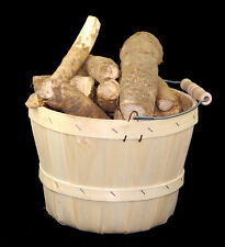 New Horseradish Roots Natural Organic Medium Bare Root Ready to Plant -1 Pound