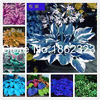 Colorful Hosta Flores Seeds Plants Bonsai Flower Coleus Genus Indoor As 200pcs