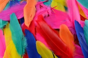 Quill Feathers for Arts and Crafts, 72 per pack, 3cm - 10cm long, Kids, Hats,