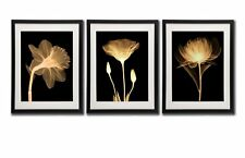 Black White And Gold Wall Art Canvas Prints Decor Framed Flowers Painting Poster