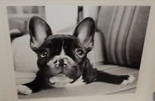 French Bulldog Black And White Small Poster