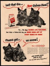 1948 Gaines Dog Meal - 2 Cute Norwich Terrier Puppy Dogs - Animal Pet Vintage Ad