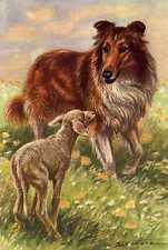 Collie and Lamb - MATTED Dog Art Print - German / NEW U