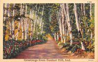 Bunker Hill Indiana~Path Thru Birch Trees~1934 Linen Postcard
