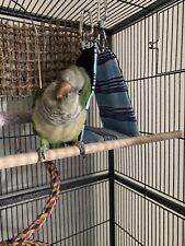 Parrot Sleeping Hut