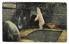 ANTIQUE POSTCARD POLAR BEARS CAVES WATER BELLE ISLE ZOO DETROIT MICHIGAN MI 1912