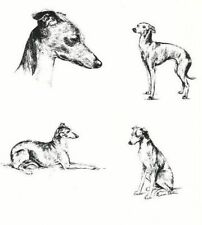 Italian Greyhound - 1963 Vintage Dog Print - Matted