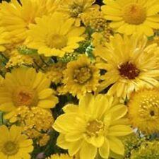 500 Seeds Yellow Wildflower Mix Wild Flower