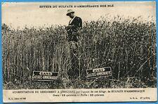 CPA: Effets du sulfate d'ammoniaque sur le blé