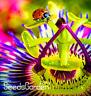 100 Pcs Seeds Passion Flowers Flores Vine Fruit Passiflora Bonsai Plants Garden