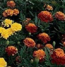 200 Marigold Janie Mix French Marigold Seeds BULK SEEDS