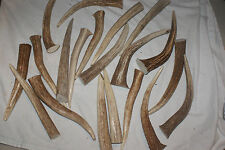 "1 POUND LONG 7-9"" PREMIUM AXIS ANTLER TIPS POINTS TINE LOT CHEW KNIFE DEER LB"
