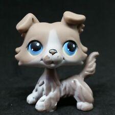 Littlest Pet Shop #67 LPS Grey Collie Blue Eyes Dog / Chien Colley