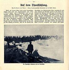 B. Erwin von Bary Auf dem Thunfischfang am Mittelmeer Historische Memorabile1908