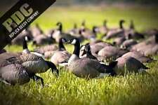 30 DECOY CANADA GOOSE HEADS FLOCKING KIT,  BLACK DUCKS OR CROWS .