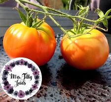 Tomate COSMONAUT VOLKOV Tomatensamen Saatgut 10 Samen kälteresistent ertragreich