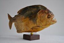 Curiosité - Taxidermie - Piranha du Brésil