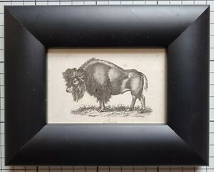 1806 BISON FRAMED ANTIQUE ORIGINAL PRINT - SMALL SIZE - 215 YEARS OLD