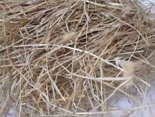5kg Rabbit guinea pig small animal rye Hay food bedding