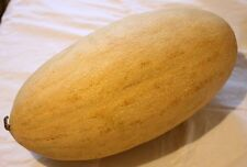 10 Uzbek-Russian Melon Seeds IRIDESCENT-MIRZACHUL-(Raduzhnaya) Heirloom Fruit