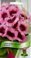 "Gloxinia ""Charisma Pink"". High Quality"