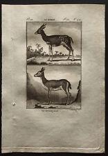 1799 - Buffon - Le Bosbok / Le Bitbok femelle - Gravure zoologie