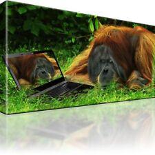 Affe vs Notebook Bild auf Leinwand / Bilder. Orang-Utan