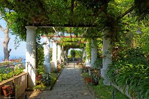 VLIES Fototapete-PERGOLA CAPRI-(1070V)-Garten Toskana Terrasse Pflanzen Blumen