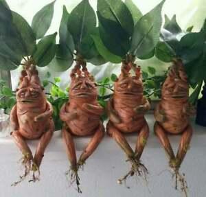 Halloween Magical Creatures Mandrake Plant Statue Home Garden Yard Decor Resin